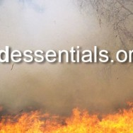 Aidessentials.org